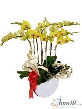 bình hoa lan gốm sứ