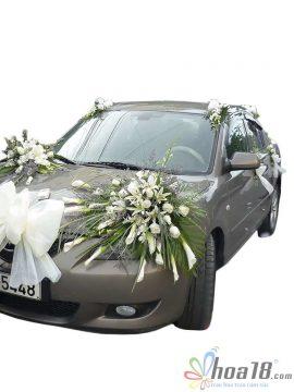 Mẫu xe cưới